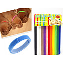 Chat / Chien Colliers Arc-en-ciel Nylon