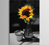 Stretched Canvas Art Still Life Sun Flower Vase by Harold Silverman