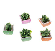 6 Pieces Potting Style Cactus Shaped Growing Toy