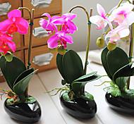 """11""""H Butterfly Orchid Floral Arrangement (Color Sent Randomly)"""