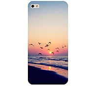 Seaview Pattern Phone Back Case Cover for iPhone5C