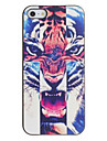 Roaring Tiger Pattern PC Hard Case with Black Frame for iPhone 5/5S